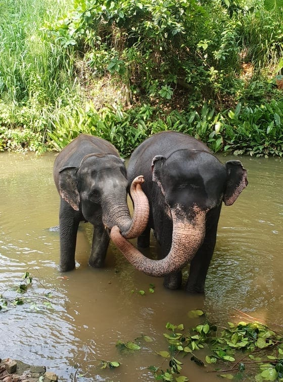 duurzaam Millennium Elephant Foundation Online Jungle